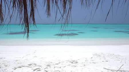 Perfect wild Maldives shore with turquoise sea water and white sand Stock Footage