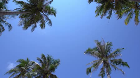 Tropical pristine view with top of coconut palm tree on blue sky background