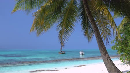 Yachts and speedboats shipping at the sea. View from Maldives island through coconut palm tree