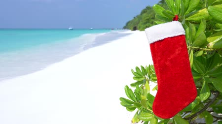 Christmas stocking hanging on plant with green leaves at the beach on Maldives island