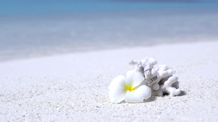 Marriage rings on coral decorated white plumeria flower on sandy beach close to turquoise sea. Tropical wedding