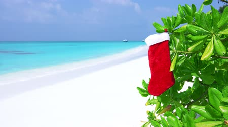 чулки : Christmas stocking hanging on plant with green leaves at the beach on Maldives island