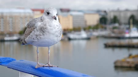Seagull sitting on ship railing