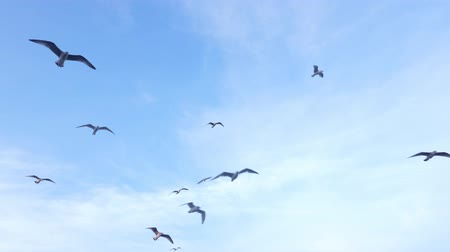 Flock of seagulls in the blue sky Stock Footage