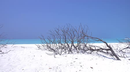 maldivas : Perfect wild sandy beach with dry bush