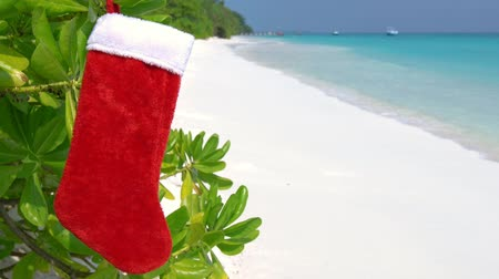 чулки : Christmas stocking on plant at the beach on tropical island