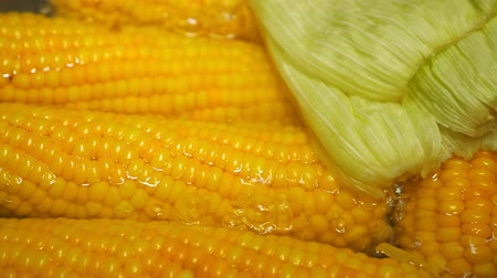 ebulição : Boiling corn at the pan Stock Footage