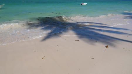 dominikana : Tropical beach with shadow of coconut palm tree casting on sand