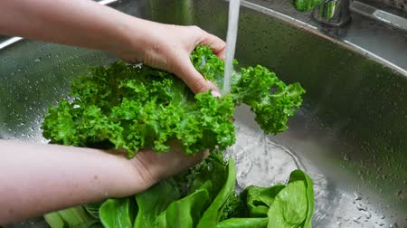 pickled : Woman washing in water in sink green kale cabbage leaves in kitchen
