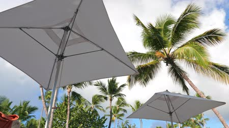 zonnescherm : Sunshade umbrellas and coconut palm trees on blue sky and clouds background