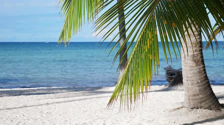 dominikana : Coconut palm trees on tropical beach