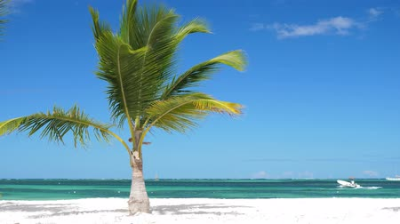 trópicos : Single coconut palm tree on tropical beach with boat in the sea