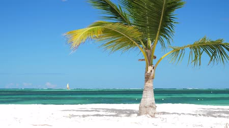 dominican : Single coconut palm tree on tropical beach