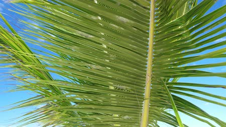 trópicos : Palm tree foliage on seashore