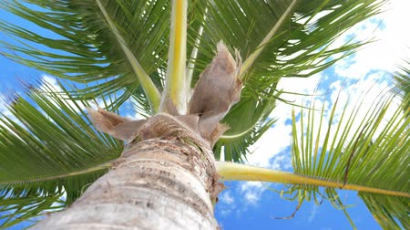 кора : View from bottom on top of palm tree with sky and clouds Стоковые видеозаписи