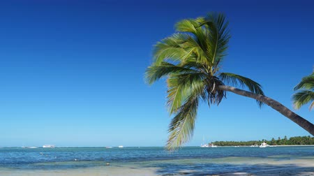 hawai : Coconut palm trees on caribbean beach Archivo de Video