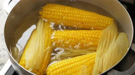kukoricacső : Boiling corn at the pan Stock mozgókép