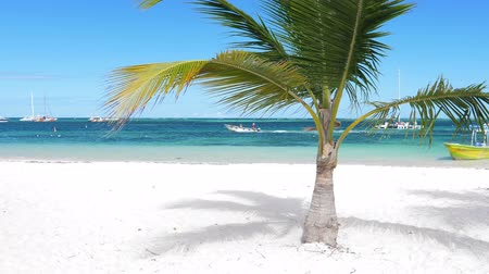 карибский : Single coconut palm tree on tropical beach with boat in the sea