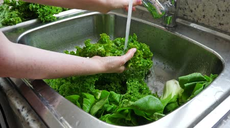 frondoso : Woman washing in water in sink green kale cabbage leaves in kitchen