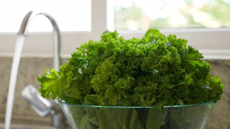 frondoso : Freshly washed green kale cabbage leaves