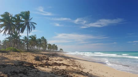 dominikana : Macao beach with coconut palm trees
