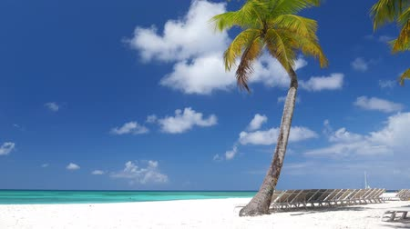サンベッド : Beach calm scene with sunbeds under coconut palms close to Caribbean sea 動画素材