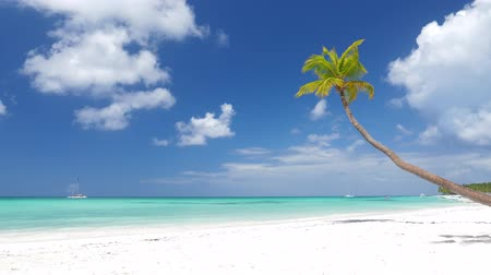 dominican : Coconut palm trees on white sandy beach on caribbean island