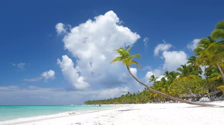 dominicana : Coconut palm trees on white sandy beach on caribbean island