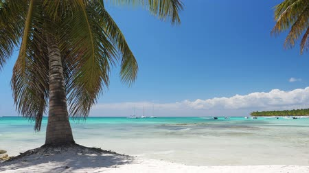 saona : Coconut palm trees on white sandy beach on caribbean island