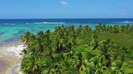 dominikana : Aerial view on tropical beach with coconut palm trees