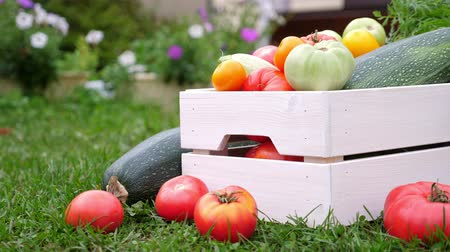 いろいろ : Vegetables in white wooden box at the garden, outdoor