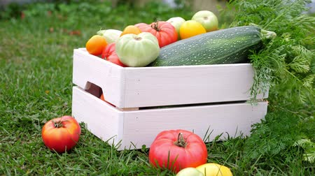 цуккини : Vegetables in white wooden box at the garden, outdoor