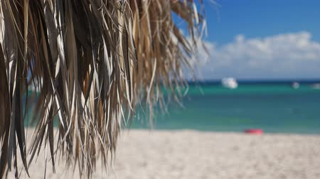 napágy : Tropical shore with thatched palapa