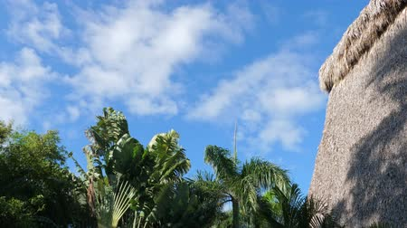 rieten kap : Top of coconut palm trees and thatched palapa roof on blue sky background Stockvideo