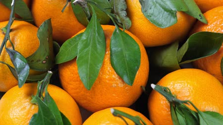 mandarynka : Pile of tangerines with green leaves