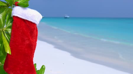 чулки : Christmas stocking hanging on plant with green leaves at the beach on island, perfect getaway for your vacations