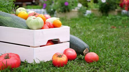 cuketa : Vegetables in white wooden box at the garden, outdoor