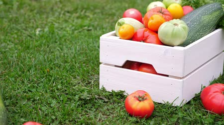ズッキーニ : Vegetables in white wooden box at the garden, outdoor