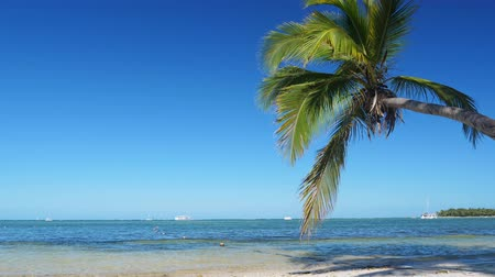 lorbeerblatt : Coconut palm tree on tropical beach Videos