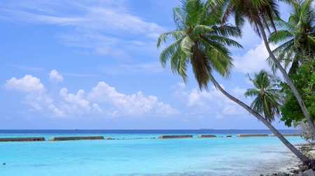 waterline : Tropical pristine beach with coconut palm and turquoise water
