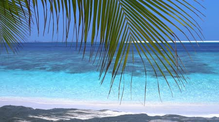 sandpit : Tropical island at maldivian atoll in Indian Ocean Stock Footage