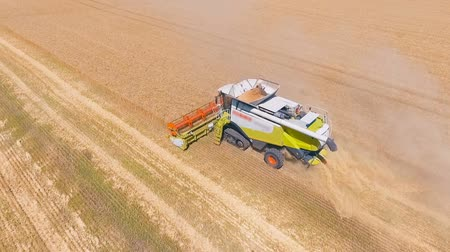 сельскохозяйственный : Aerial drone shot of a modern combine harvester working day in a big wheat field. Harvesting. Стоковые видеозаписи