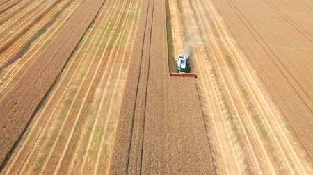 příznivý : Aerial drone shot of a modern two combines harvesters working day in a big wheat field. Harvesting. Dostupné videozáznamy