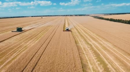 příznivý : Aerial drone shot of a modern three combines harvesters working day in a big wheat field. Harvesting. Dostupné videozáznamy