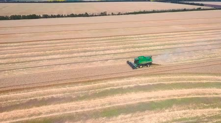 příznivý : Aerial drone shot of a modern combine harvester working day in a big wheat field. Harvesting. Dostupné videozáznamy