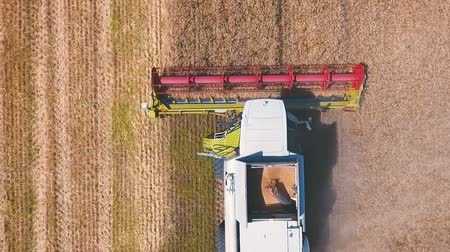 příznivý : Aerial drone shot of a modern combine harvester working day in a big wheat field. Harvesting. From top to bottom. Dostupné videozáznamy