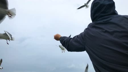 baltské moře : People on the ferry are fed bread with gulls hovering in the air against the cloudy sky. Slow motion.