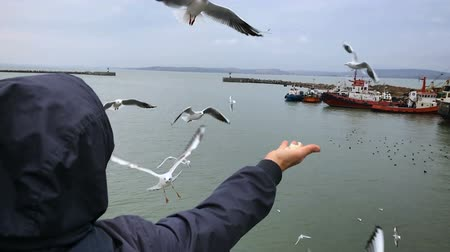 балтийский : People on the ferry are fed bread with gulls hovering in the air against the cloudy sky. Slow motion.