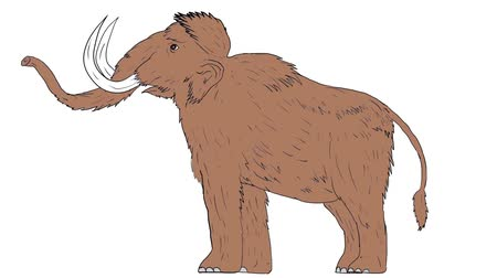 primigenius : 2d Animation motion graphics showing illustration of a woolly mammoth, Mammuthus primigenius, a prehistoric elephant that lived during the Pleistocene epoch and one of the last mammoth species standing raising tusk, viewed from the side set on white scree Stock Footage