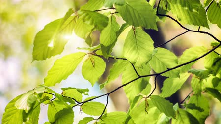 Nature background with green leaves at sunny day. 4K, Ultra High Definition, Ultra HD, UHD, 2160P, 3840 x 2160
